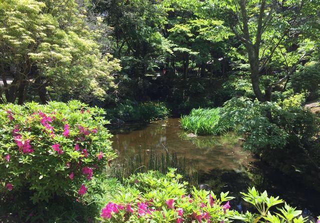 我的游玩图集奈良日本万叶植物园v图集游记五室内设计现场量房调研报告图片