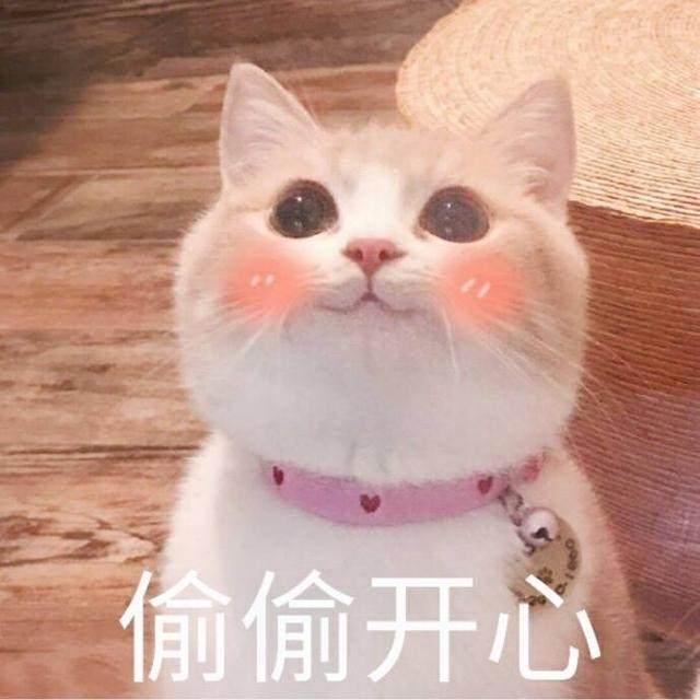 爱撸猫的看过来,送一波超吃惊的猫咪表情!表情包的看美女图片可爱图片