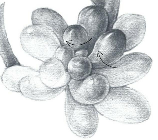 虹之玉多肉铅笔教学素描,带你用步骤感受质感松林钻孔机操作指南图片