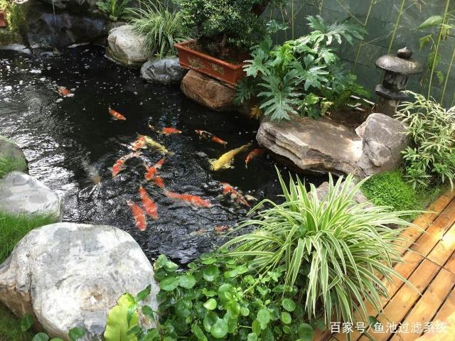 鱼池庭院锦鲤景观别墅,爱上建造第一步,养鱼一东莞别墅幢介绍独图片
