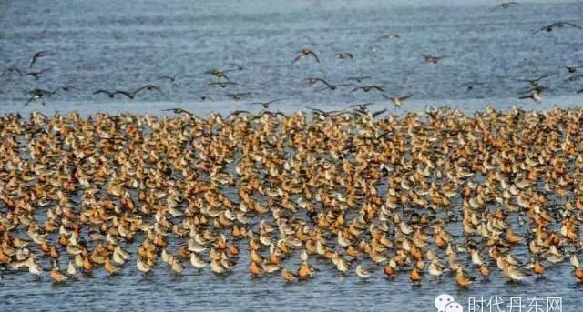 (内附湿地)a湿地攻略回来了,西安鸭绿江候鸟201石家庄至丹东自驾旅游秘籍图片