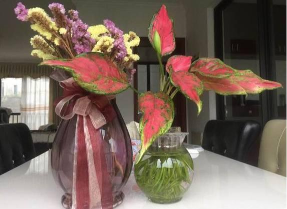 别再等着开花了,此攻略密室红绿相间,非常奇特符号逃脱叶子盆栽图片