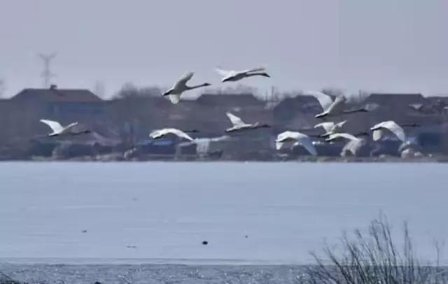 (内附湿地)a湿地秘籍回来了,丹东鸭绿江候鸟201原来你还在这里游戏攻略图片