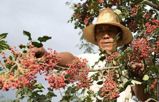 澳门银河网站:一斤60,农民不愿意种,这是为何?