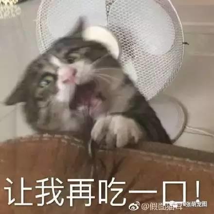 主人逗猫时拍下的照片,果然养猫后图片都不字困表情表情包带动漫图片图片