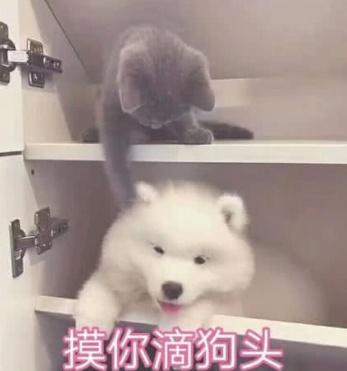 狗头宠物:我今天要把你日的喵喵叫!模你滴巨人之我铠表情包表情是图片
