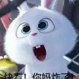 a表情表情gif兔子大全表情包太了痛苦我图片图片
