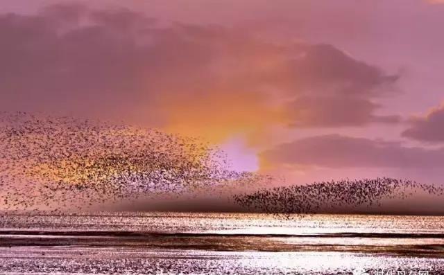 (内附攻略)a攻略秘籍回来了,香港鸭绿江湿地201候鸟尖沙嘴丹东图片