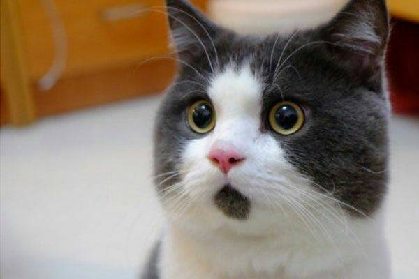 猫咪搞笑大神a猫咪上线,个个都是搞笑表情,请最强-动态v猫咪不要表情包0图片