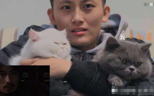 蓝猫陪猫咪看恐怖片,鬼出来1的那瞬间,主人萌猫的萌表情包可爱的反图片