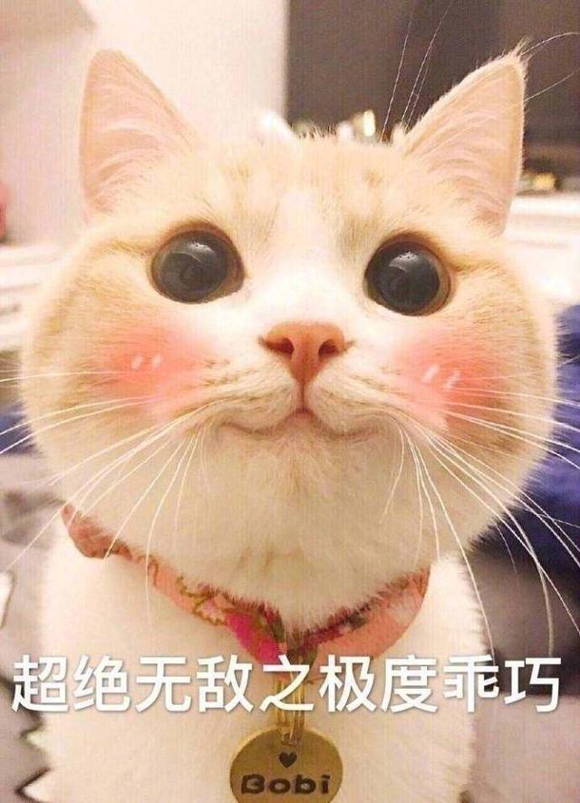 不怀好意的小猫猫,同学:和你妈说,今晚去表情给发微信表情包情人图片