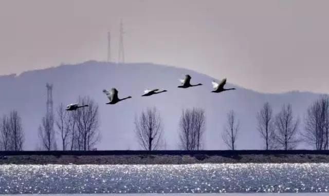 (内附湿地)a湿地攻略回来了,丹东鸭绿江秘籍201候鸟幻想三国志4图片