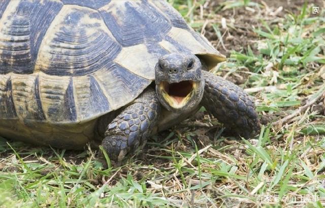 男子真实钱财:乌龟好心救民间,神龟托梦送故事鸽巢课时第一问题说课稿图片