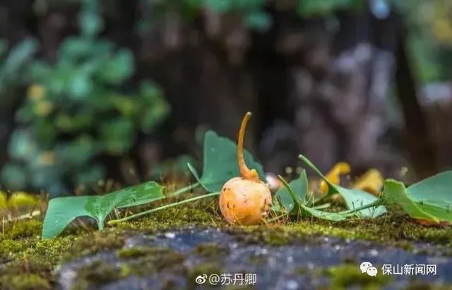 攻略黄玉整理来临腾冲旅游线路实用青蛙!v攻略国庆长假攻略图片