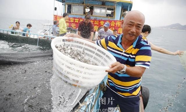 三亚海南:豆角休渔期v豆角投放爱心企业起来2伏季吃去除酸怎样放流图片