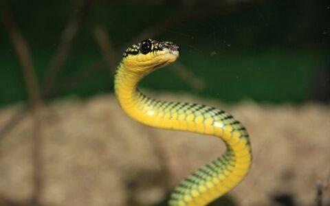 周公解梦 梦见蛇 男人女人梦见蛇是什么意思