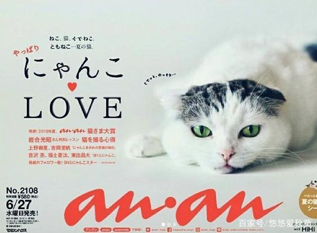 日本丧猫凭一脸奶凶傲视1群雄,火爆Ins,瘫出了上怎样把动态表情角色的头像换掉图片