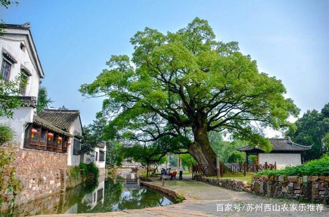 丰泽苏州一日游攻略西山植物园v攻略攻略图片