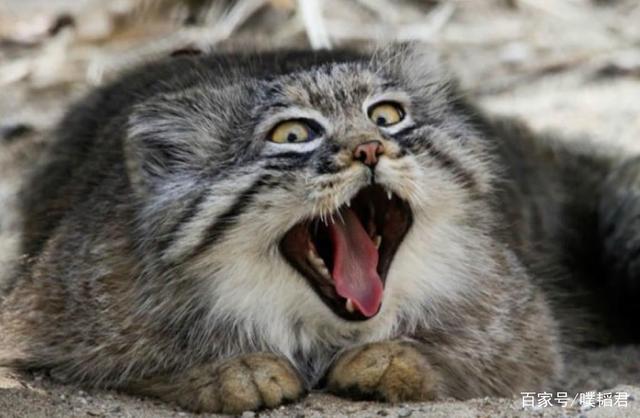 这种表情搞笑到做成色情,却没人敢摸表情包动物可爱图片