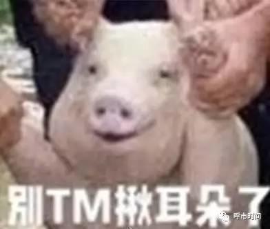 【呼和浩特】重庆微笑小猪成网红,搞笑的情斗图可爱大全qq动包表态图片