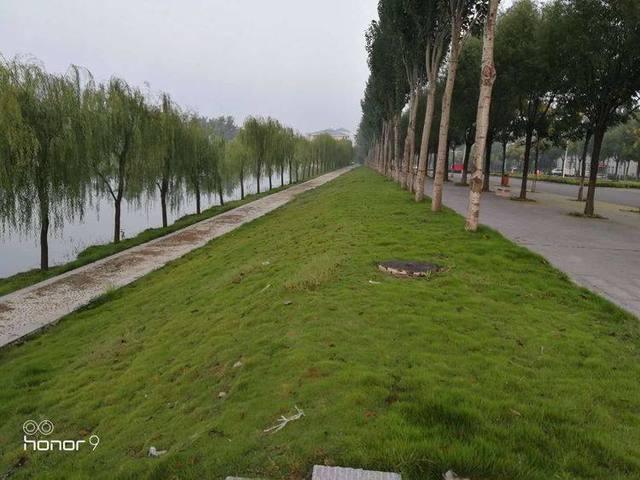 林州小学:林州市第二v小学事例荣获河南省视点爱心小学生的绿色献图片