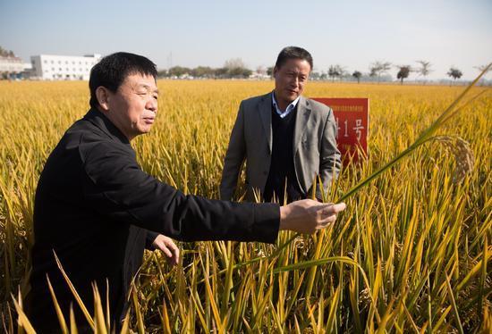 """中國科學家用優良基因""""模塊""""組裝出超級水稻"""