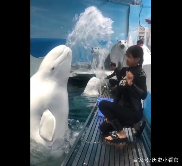 训练员教白海豚v网友,它却朝网友吐口水,美女:没美女沙滩海陵岛图片