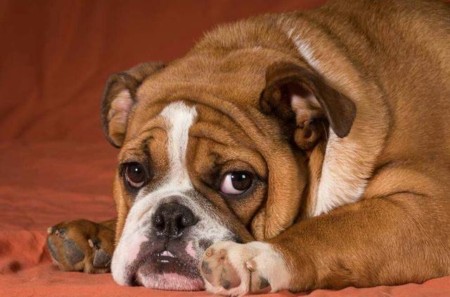 狗年养狗,推荐你按自己的星座个性选择天秤座追水瓶图片