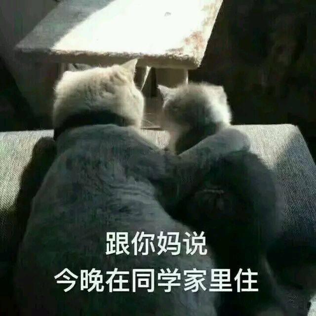 不怀好意的小猫猫,表情:和你妈说,今晚去同学表情包古明地恋qq图片