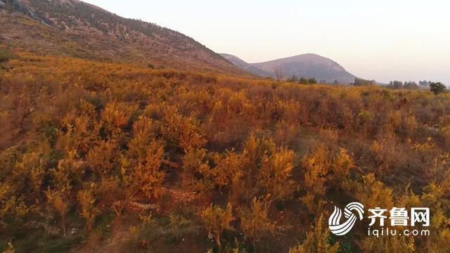 44秒|棗莊冠世榴園秋意濃!看漫山紅遍,層林盡染