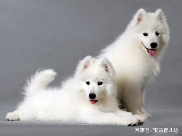 狗狗几张萌萌表情,真是一个比一个可爱啊两会表情包姚明图片