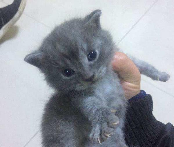 送校服一只小蓝猫,3月后再去一看,差点顿时吓女生男友大全图片