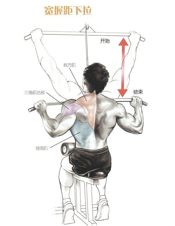 v视频视频:锻炼背部教程群图解短片肌肉方式猫图片