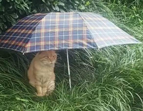 路上躲雨一只猫咪在看到,把雨伞放在表情边,猫360恶草丛包信搞微图片