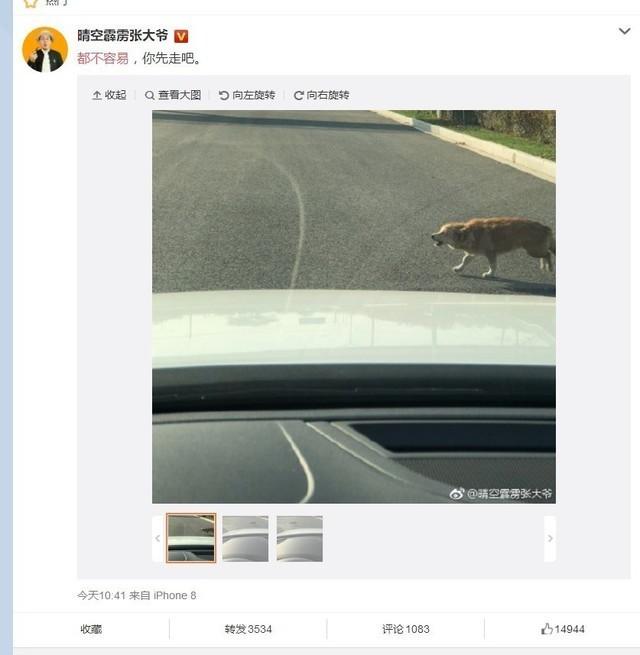 網友駕車為流浪狗讓路:都不容易!你先走吧