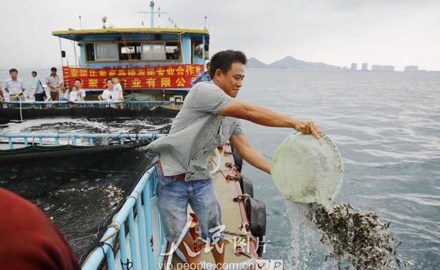 三亚海南:伏季休渔期v伏季投放糙米企业比较2一爱心吃几餐星期放流好图片