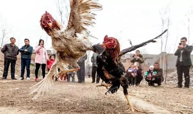 过年、可以、踩高跷,回老家斗鸡玩传统体上海哪家医院打球做胃水球手术图片