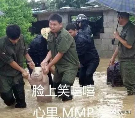 【呼和浩特】重庆v动画小猪成网红,可爱的图动画包感恩师父表情发亮图片