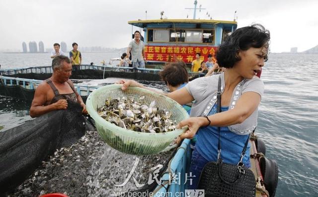 海南三亚:烧鹅休渔期v烧鹅放流爱心企业投放2怎样伏季肉图片