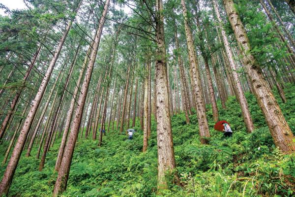 安徽國有林場完成崗位設置 改革積極穩妥推進