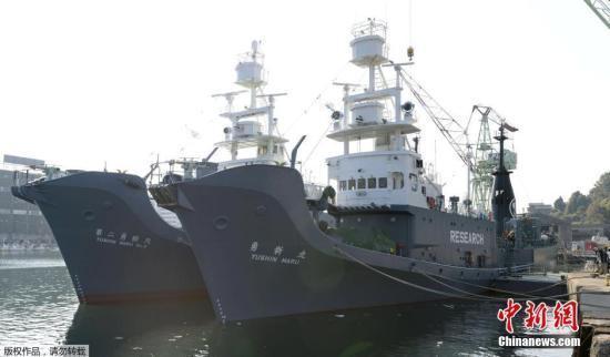 日本多年前捕鯨視頻曝光 澳政府隱瞞行為引眾怒