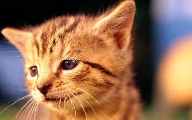 宠物:猫尾巴骨折怎么办?