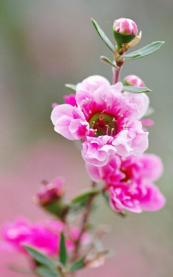 拜年祝福的好句子,新春佳节,愿你宏图大展,猪年