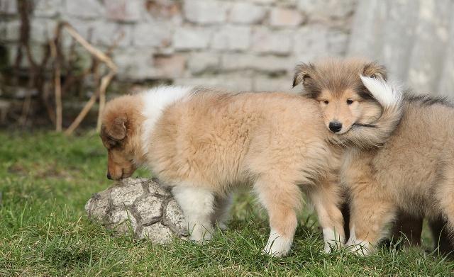 宠物:为什么我的小狗会吐?在线等