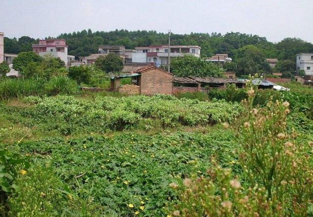 农村房屋被拆建,补偿款分房屋补贴和宅基地补