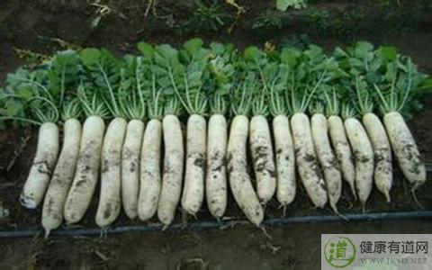 白萝卜的热量_白萝卜的营养价值