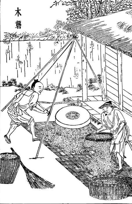 中国人吃米饭历史悠久,外国人认为吃米饭会胖