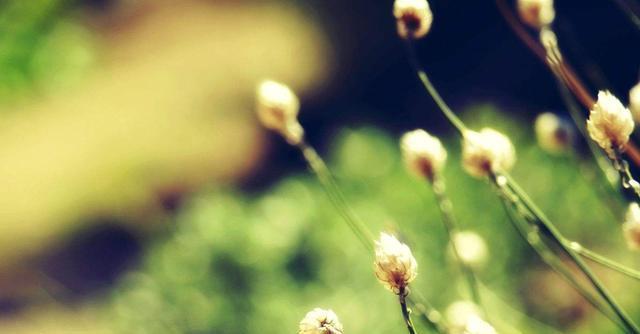 5个简短经典励志哲理小故事(值得收藏)