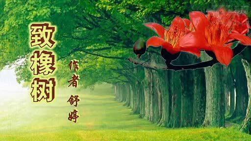 舒婷这兽致橡树不愧是朦胧诗派最经典的爱情诗