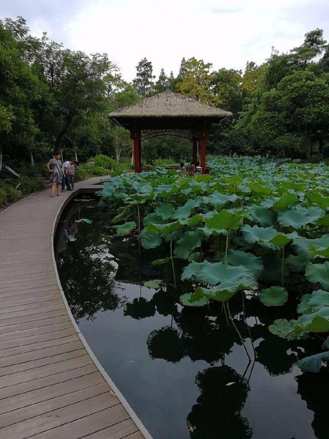 荷花(Lotus flower):属毛茛目睡莲科,是莲属二种植物的通称。又名莲花、水芙蓉等。